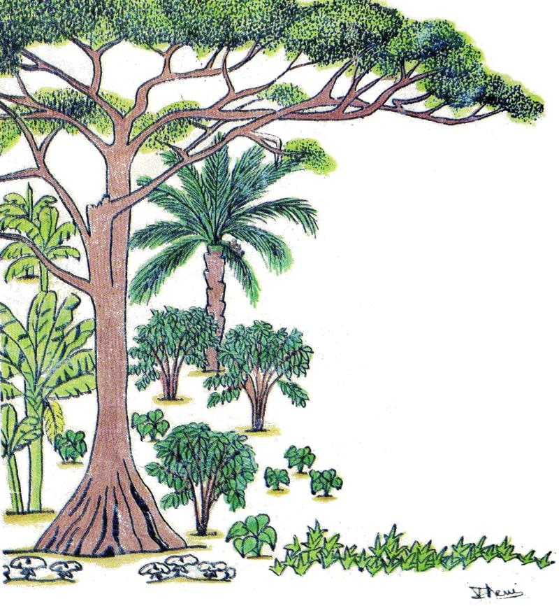 Qu est ce qu un arbre fertilitaire ong apaf - Qu est ce qu un jardin ...